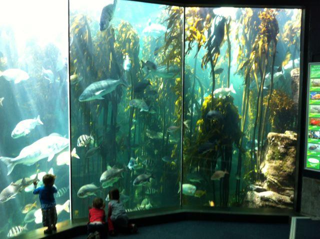 aSCAREium at the Aquarium