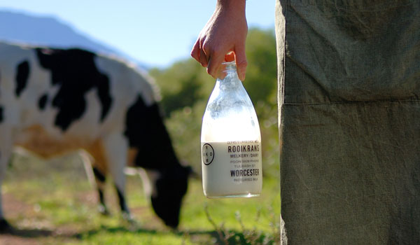 The Cape Dairy Experience: Celebrating the journey of milk from cow to kitchen